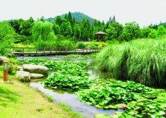 人工湿地污水处理技术