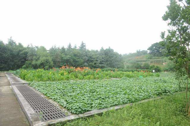 人工湿地处理技术在农村生活污水处理中的应用